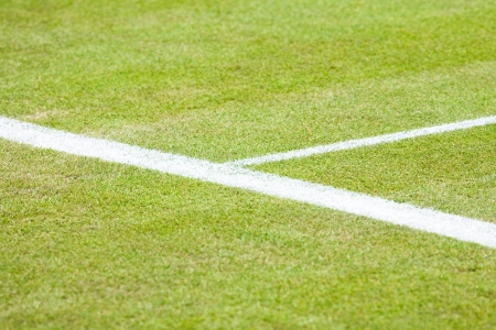 Closeup of the service line on a grass tennis court photo