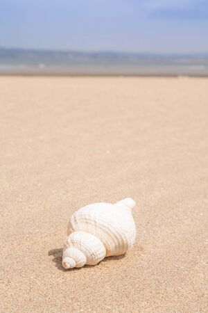 Beach scene with a sea shell and lots of copyspace photo