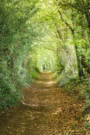 Trees leading down a country footpath in an English forest photo