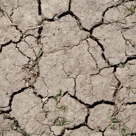Brown parched land with cracks due to dry climate photo