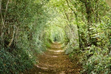 paisajes: Avenida de los �rboles en el campo Britsh