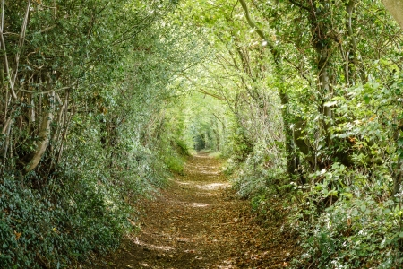 Avenue of trees in the Britsh countryside photo