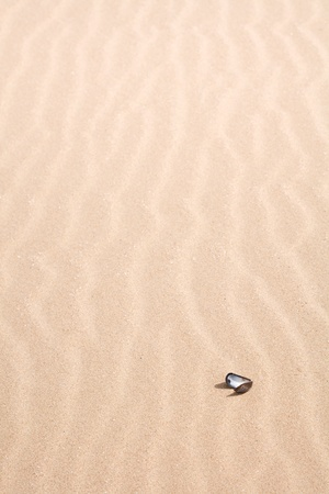 Seashell on a sandy beach with ripple pattern photo