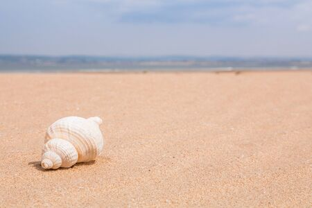 Beach detail with a seashell on a sandy beach with the sea in the distance photo