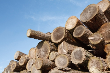Stack of sawn tree trunks with copyspace photo