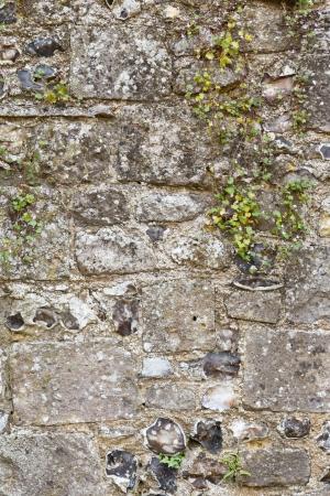 castello medievale: Vecchio muro di pietra primo piano di un antico castello medievale