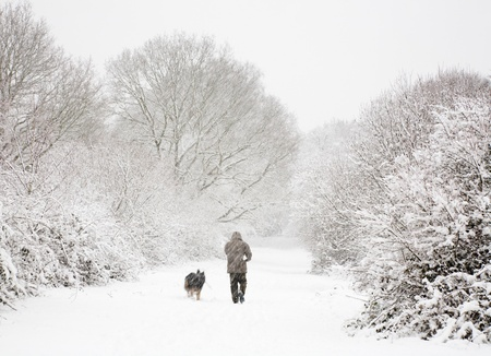 snowscene: One man walks his dog in snow covered woods in winter