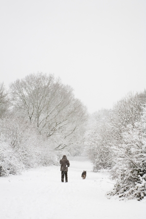 One man walks his dog in snow covered woods in winter. With copy space above photo