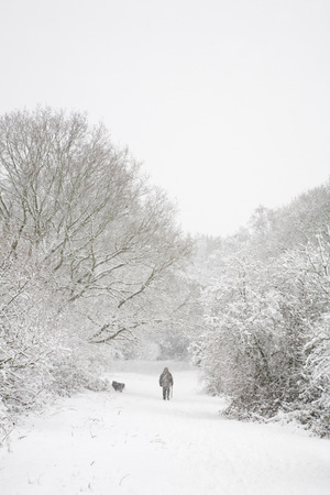 snowscene: One man walks his dog in snow covered woods in winter. With copy space above