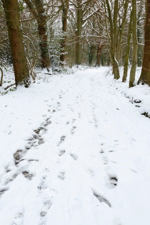 snowscene: Snowy English forest with trail of footprints Stock Photo