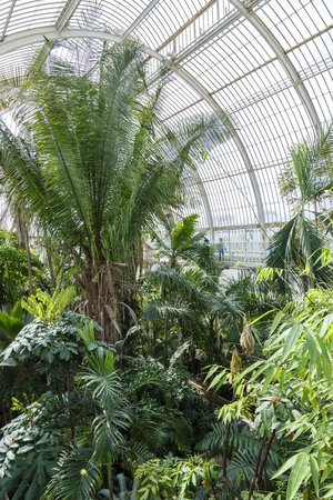 London, UK - April 18, 2014. Interior of the Palm House at Kew Gardens. The gardens were founded in 1840 and are of international significance for botanical research and education.