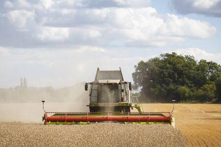 Buckingham, UK - August 19, 2014. Combine harvester harvests wheat in a field in English countryside Archivio Fotografico - 130078399