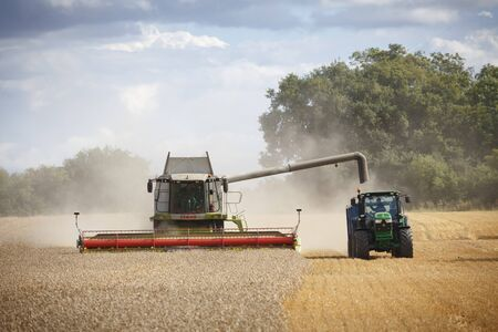 Buckingham, UK - August 19, 2014. Combine harvester and tractor harvest wheat in a field in English countryside Archivio Fotografico - 130078420