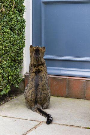 Cat sitting on doorstep of a house in England, UK Foto de archivo - 129244675