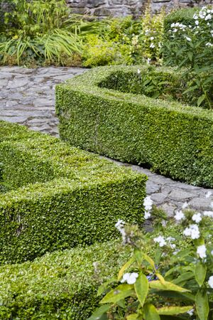 Box hedge, buxus sempervirens, in an English garden in the UK 写真素材