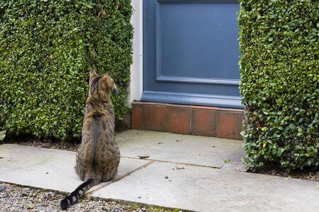 Cat sitting outside front door of a home in England, UK Foto de archivo - 129249674