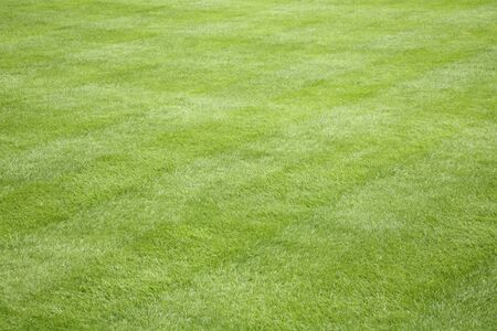 Detail of beautiful green grass in a backyard garden depicting lawn care and landscaping in summer and spring Stock Photo
