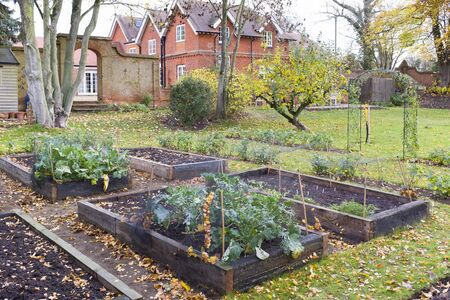 Victorian garden in Autumn in the UK with vegetables growing in raised beds Archivio Fotografico