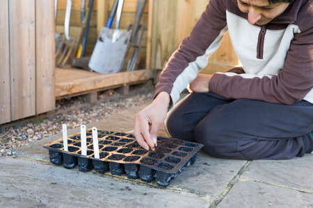 Woman sowing seeds, filling a plastic plant cells seed tray with compost in a garden, UK