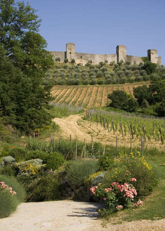 walled: Vineyards in front of the medieval walled town of Monteriggioni in Tuscany