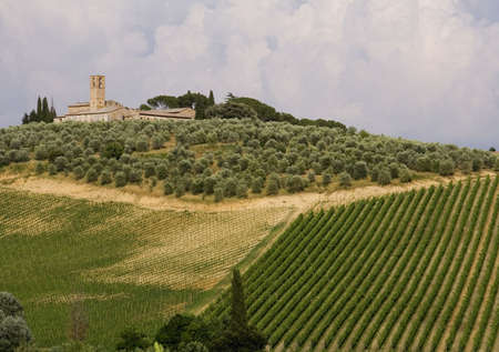 Neat rows of vines in a Tuscan vineyard with olive trees and a church in the background photo