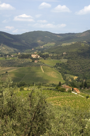 chiantishire: Vineyards in the Chianti countryside