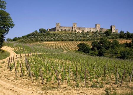 walled: Vineyards in front of the medieval walled town of Monteriggioni in Tuscany, Italy