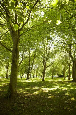 pathways: View of a park on a sunny summers day. Abington Park Northampton