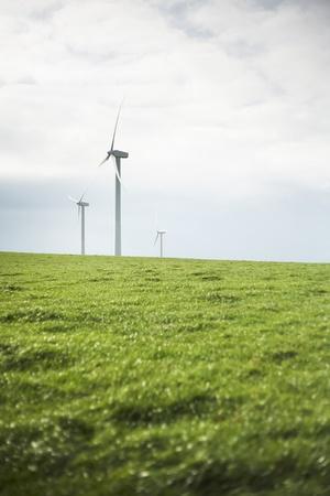 wind farm: Turbinas de viento en el campo e?o