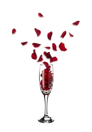 popping out: Red rose petals popping out of champagne glass into the air on white background Stock Photo