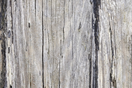 wood textures: Old distressed wood textured background