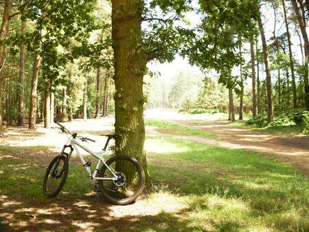Mountain bike in forest leaning against a tree in summer