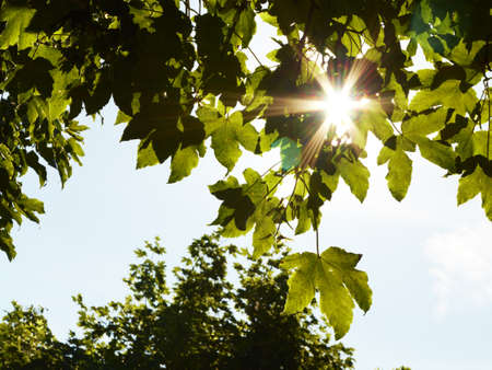 tranquilly: Sun shining through tree leaves on a sunny day