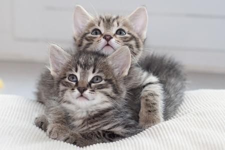 Brotherly Love photo
