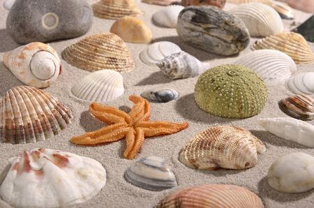 Beach scene with different shellfishes, snailes, seafood and stones, background Stock Photo