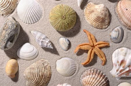 travel agency: Beach scene with seashell and conch, top view, background Stock Photo