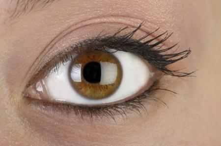 ojos marrones: Primer plano del ojo de mujer, Macroshot, estudio, linterna