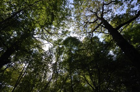 alluvial: alluvial forest, wide-angle