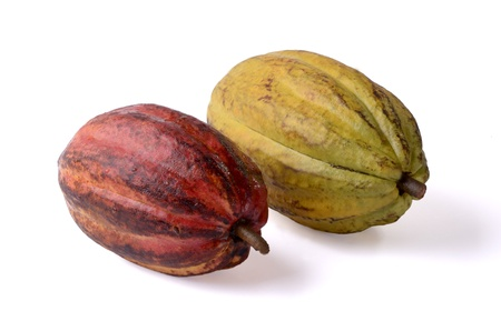 two cocoa fruits, isolated, studio shot Stock Photo