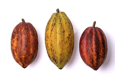 drie verse cacao vruchten, geïsoleerd