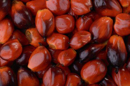 palm nuts, studio shot Stock Photo