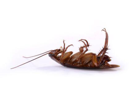 annihilation: Dead Cockroach, isolated, studio shot