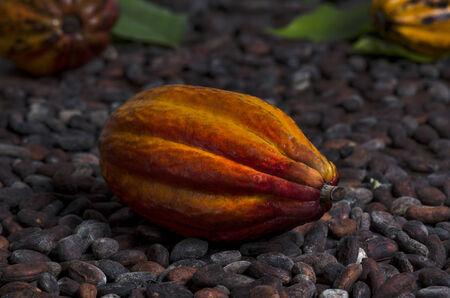 stimulant: Cocoa Pod on Cocoa Beans, Still, Studio Shot