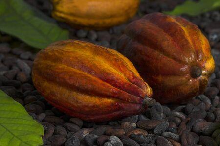 Couple of Cocoa Pods on Cocoa Beans, Still, Studio Shot