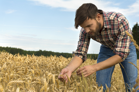inspecting: Young farmer inspecting crop, Outdoor Shot Stock Photo