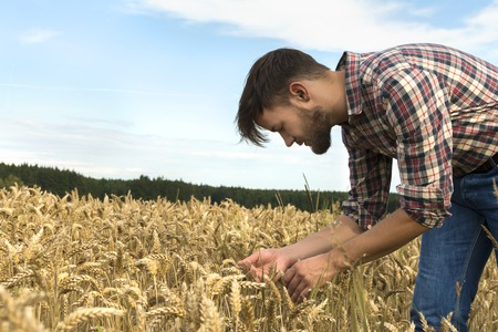 investigate: Young farmer inspecting crop, Outdoor Shot Stock Photo
