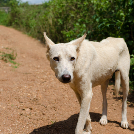 outdoor shot: African dog, outdoor shot Cameroon Stock Photo