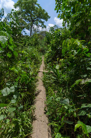 trecking: Narrow path in the rainforest of Cameroon, outdoor shot