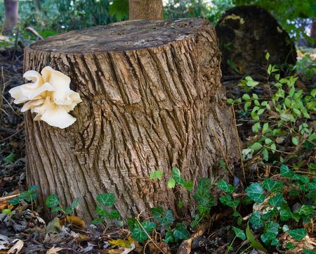 bracket: Perhaps when tree stumps have a heavy date, they decorate their lapels with bracket fungi instead of orchids.