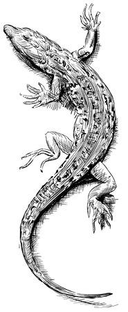 Lizard schets